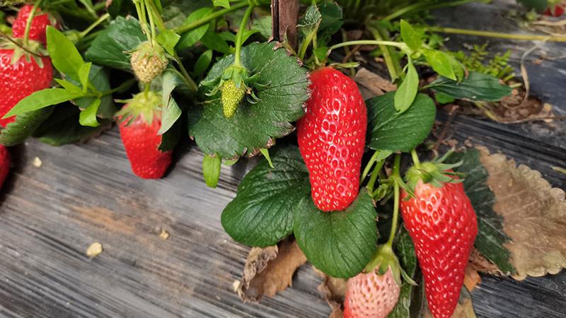 十大抗癌水果排名,第一名居然是它