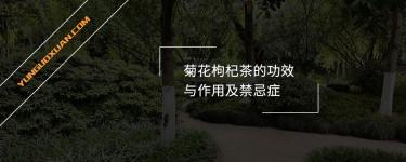 菊花枸杞茶的功效与作用及禁忌症