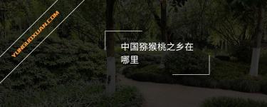 中国猕猴桃之乡在哪里?