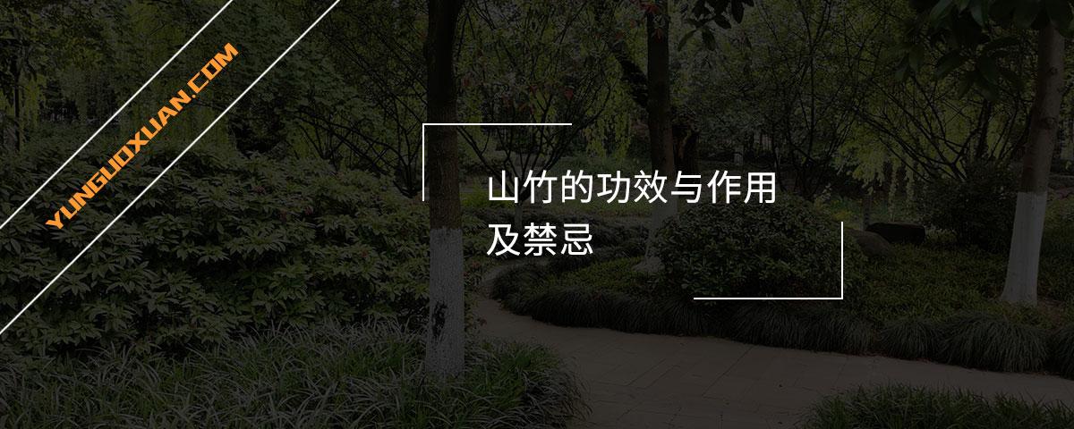 山竹的功效与作用及禁忌