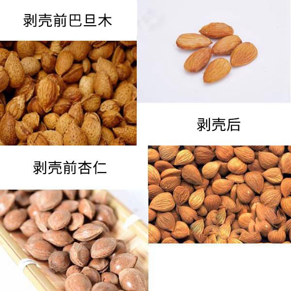 巴旦木与杏仁的区别