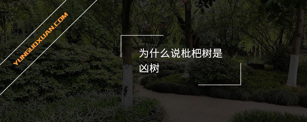 为什么说枇杷树是凶树?