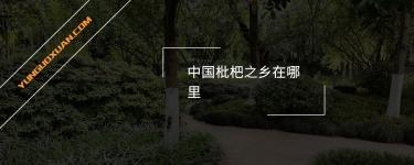中国枇杷之乡在哪里?