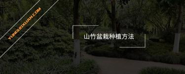 山竹盆栽种植方法