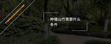 种植山竹需要什么条件?