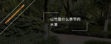 山竹是什么季节的水果?