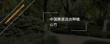 中国哪里适合种植山竹?