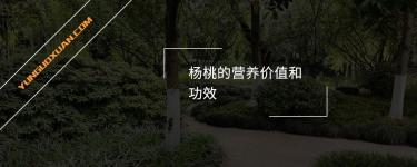 杨桃的营养价值和功效