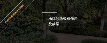 杨桃的功效与作用及禁忌