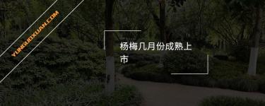 杨梅几月份成熟上市?