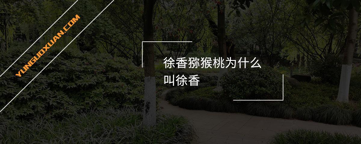 徐香猕猴桃为什么叫徐香?